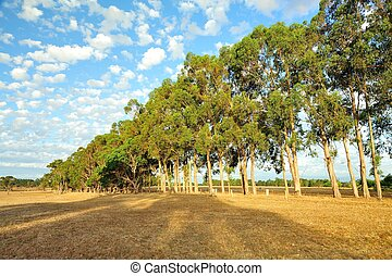 tree line - line of trees along fence line in dry paddock...