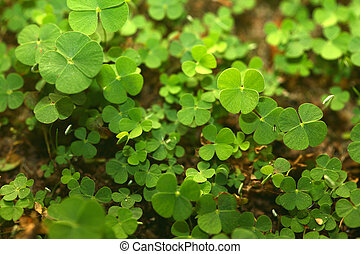 4 Leaf-Clover Forest - A jungle of 4 four leaf clovers Lucky...