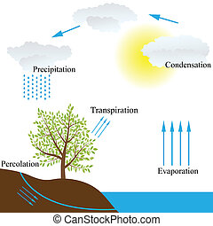 water cycle in nature - Vector schematic representation of...