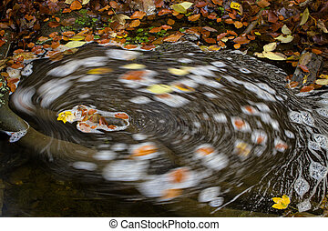 whirlpool - yellow and orange fallen leaves in a whirlpool...