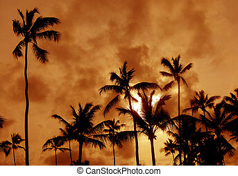 Palm Tree Silhouettes - The silhouettes of a bunch of palm...