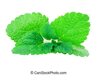 mint, lemon balm isolated on white background