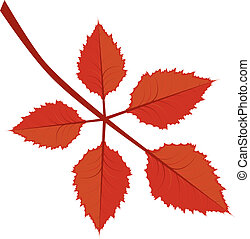 Branch with autumn leaves - Branch of bright red autumn...