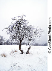 Winter crab apple tree. - Crab apple tree in the middle of...