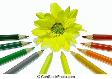 Colorful pencils isolated on white background - Colorful...