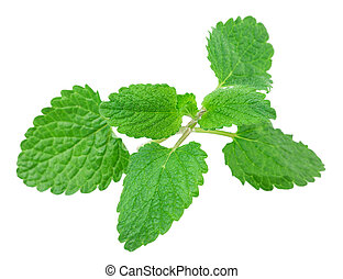 lemon balm, mint isolated on white background