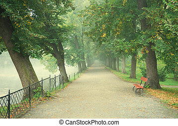 Long tree alley with a footpath disappearing in fog