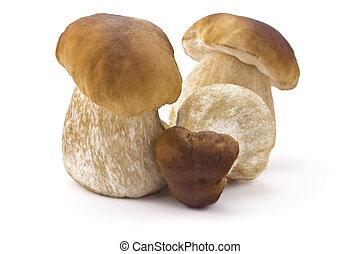 ceps - three ceps isolated on a white background