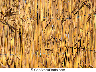 fence of dry cane