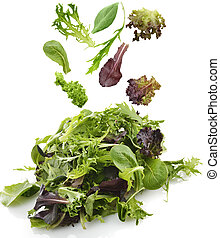 Salad Leaves - Fresh Salad Leaves Assortment On White...