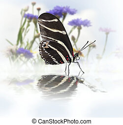 Butterfly With Reflection