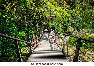 Hanging Bridge in a forest