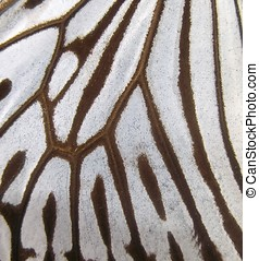 Butterfly Wing Macro - Extreme closeup of a butterfly wing...