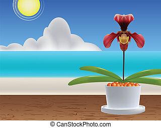 Paphiopedilum - Lady's slipper orchid. Paphiopedilum...