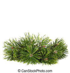 Christmas pine tree branch isolated on a white background