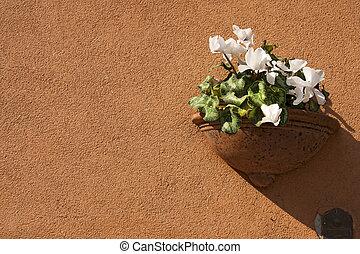 Flower Pot on Orange Wall