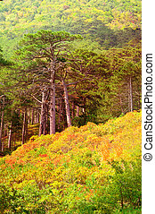 Autumn Forest on rocky Mountain hill colorful seasonal...