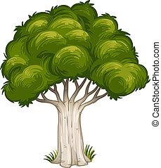 à, ombra, grande, albero