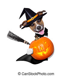 halloween witch dog holding a pumpkin behind a blank banner