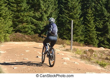 Cyclists in the Harz National Park - a cyclist in the Harz...