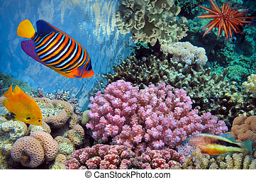 Underwater shoot of vivid coral reef with a fishes, Red Sea,...