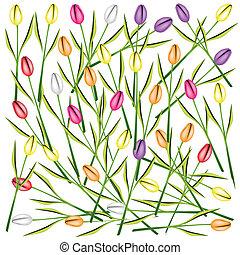 セット, 新たに, チューリップ, 花, 背景