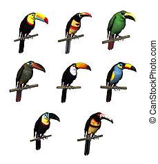 Toucan Varieties - 3d render depicting eight different...