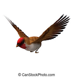 Scarlet Finch - 3D digital render of a flying scarlet finch...