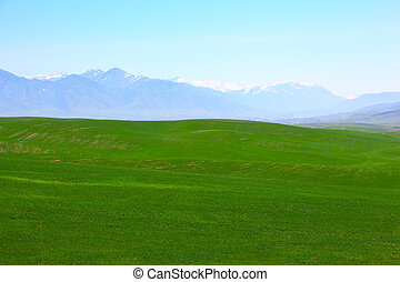 Green meadows with mountains