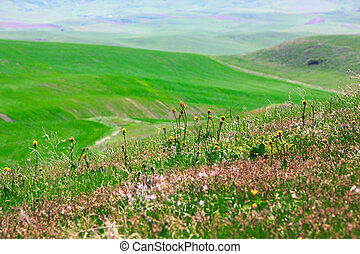 Green meadows with flowers - Summer green meadows with...