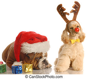 santa and rudolph dogs - bulldog with santa hat and american...