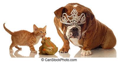 sleeping beauty dog and kitten - kitten and bulldog set up...
