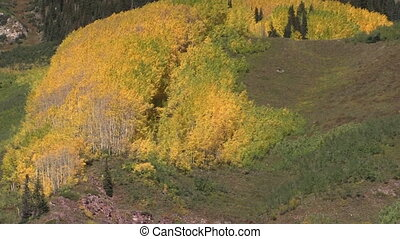 Autumn in the Rockies - a colorado mountain ablaze in fall...
