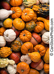 Pumpkins background - Backgrounds and textures: a lot of...