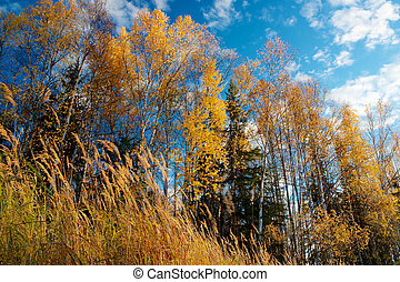 Colorful leaves on trees in autumn - Colorful leaves on...