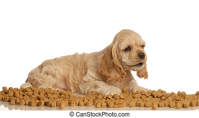 puppy surrounded by dog food - american cocker spaniel puppy...