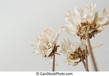 Dead Flowers Bouquet - Dead White Flowers. Relationship...