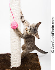 Small cat playing with a pink ball and isolated on white...