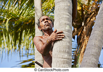 Coconut man - Man is climbing up to palm tree for harvest...