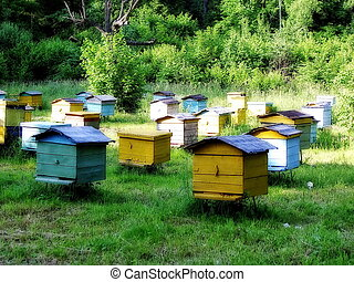 Apiary in the forest - Apiary in a forest near the village...