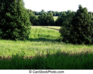 Field road going into the woods - Apiary in a forest near...