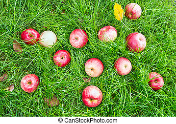 Windfall - apples lie on a meadow - Fallen red apples in...