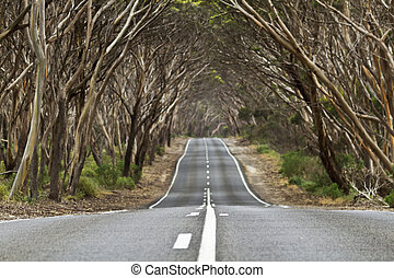 Australian Journey - Arch of trees over country road creates...