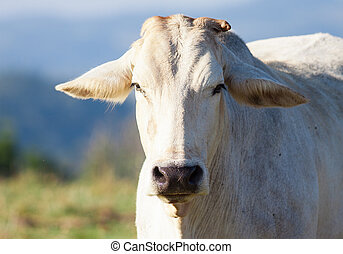 Close-up shot of cow