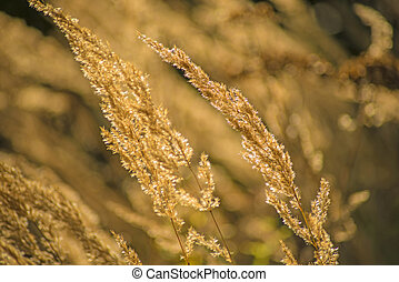 grass in wind and backlight