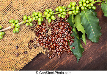 Fresh Coffee - Coffee beans and green seeds with fresh...