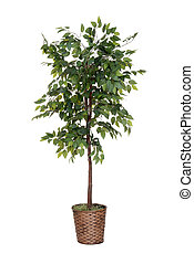 isolated fake tree house plant on white