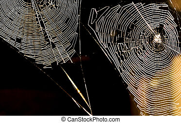 Spiders Webs at night