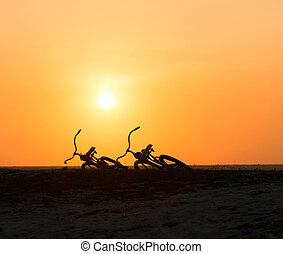 Two bikes silhouettes at the tropical sunset
