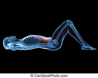 A man doing sit-ups - 3d rendered illustration of a man...